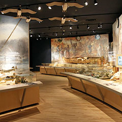 Colour photograph of an exhibition where you can see, among other things, a canoe, fishes, skulls and baskets.
